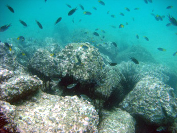 10 NEW Artificial Reefs Coming To Our Area